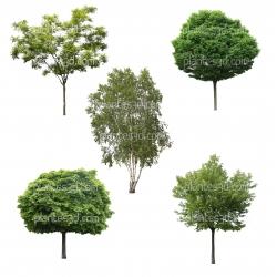 Pack de 5 arbres détourés -30%