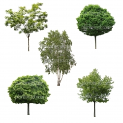 5 cutout trees