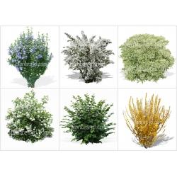 Pack d'arbustes détourés -30%
