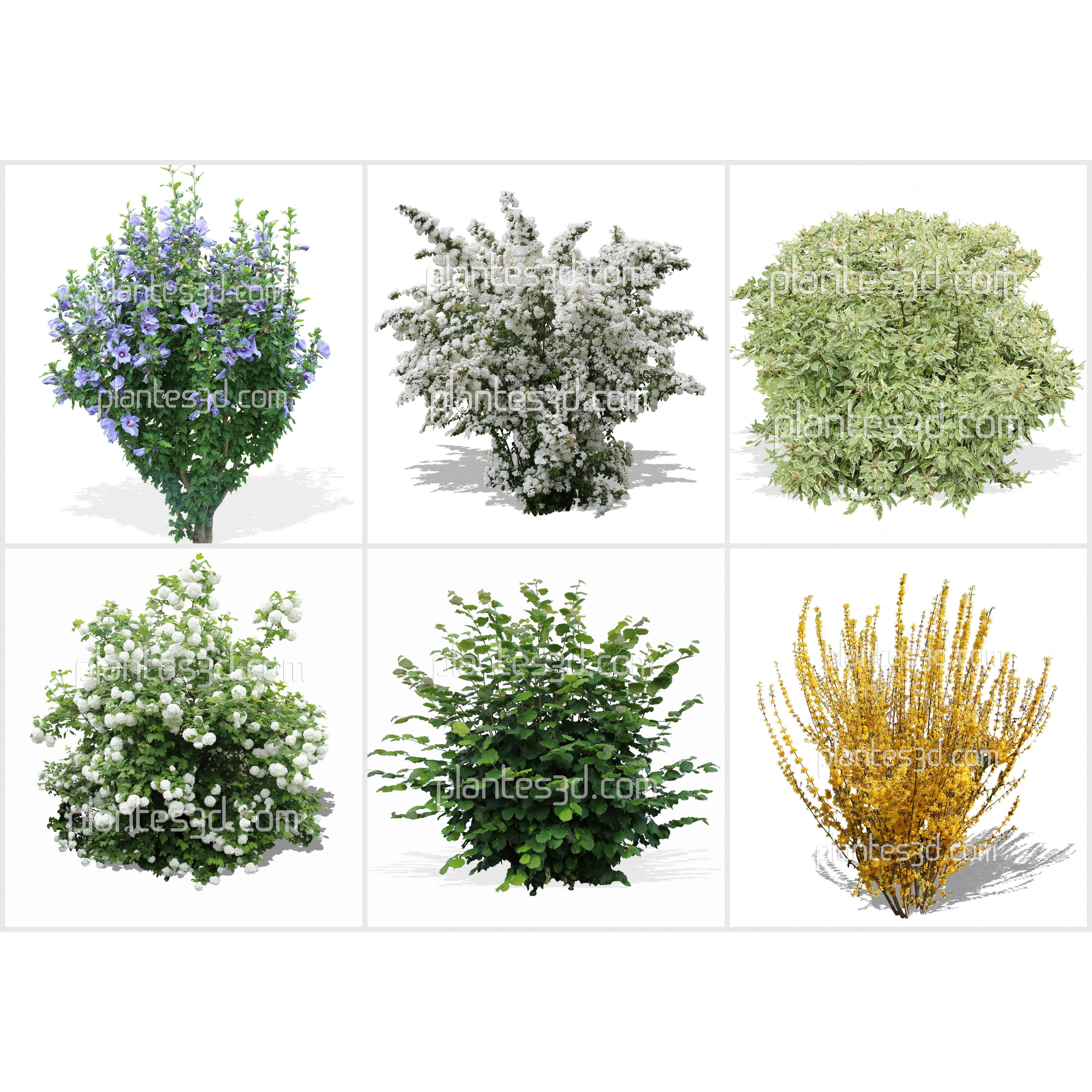 Pack d 39 arbustes d tour s for Plante 3d gratuit