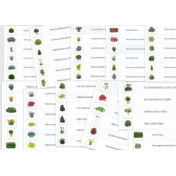 60 cutout Pflanzen