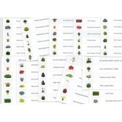 Plantes détourées lot de 60