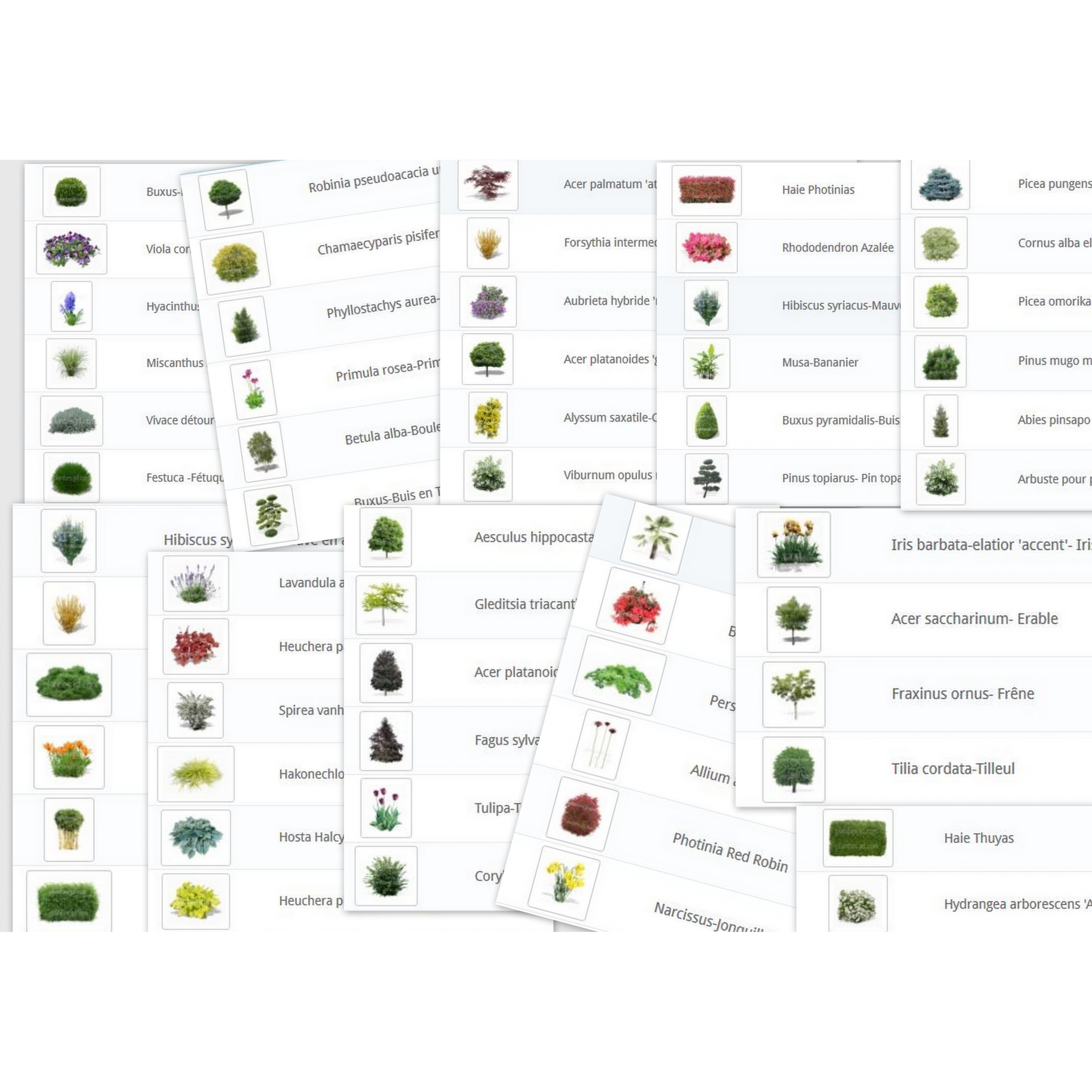 60 Pflanzen Png