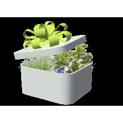Baümen und Pflanzen png kostenloss